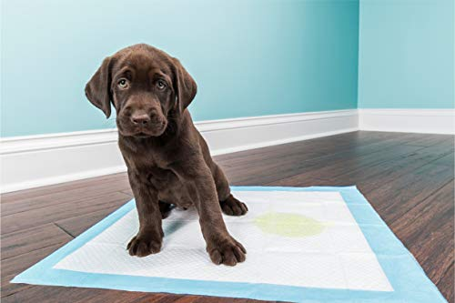 Welpen Trainingsunterlagen 40 Stück - saugstarke Hunde-Pads, Hundeklo, Welpenunterlage, Welpentoilette für Zuhause (M 40 x 60 cm)
