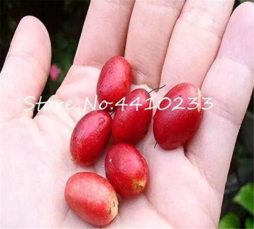 Freies Verschiffen 20 PC Tropical Miraculin Bonsai Obst Anacardium Ocntale Baum Topfpflanze Gärten Miracle Frucht-Gemüse: 1