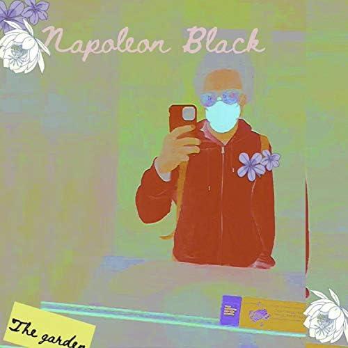 Augustus Napoleon Black