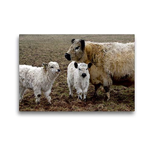 CALVENDO Premium Textil-Leinwand 45 x 30 cm Quer-Format Galloway-Familie, Leinwanddruck von Martina Berg