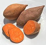 Fresh Sweet Potatoes Size: 10 LBS