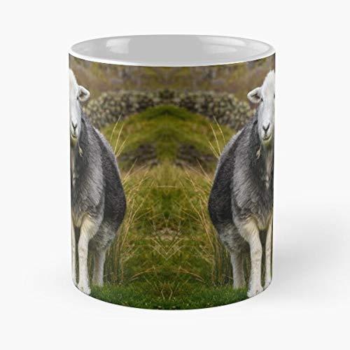 Cumbria District Sheep Herdwick and Farm Animals White Livestock Lake Grey Eat Food Bite John Best Taza de café de cerámica de 325 ml