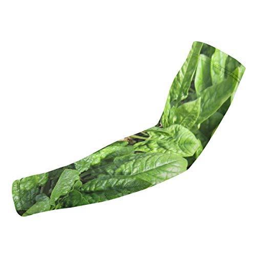 BJAMAJ Kale & Spinazie Planten UV Bescherming Koeling Arm Mouwen Arm Cover Zonwering Voor Mannen & Vrouwen Jeugd Prestaties Stretch & Vocht Wicking