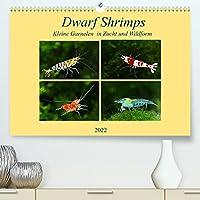 Dwarf Shrimps - kleine Garnelen (Premium, hochwertiger DIN A2 Wandkalender 2022, Kunstdruck in Hochglanz): Faszination der Farben: Zwerggarnelen (Monatskalender, 14 Seiten )