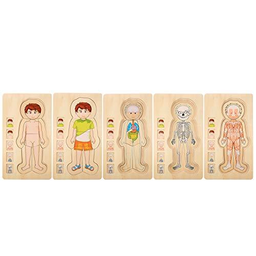 Zerodis Estructura del Cuerpo Humano Juguete de Rompecabezas, Ladrillo de Madera Educativo temprano No tóxico Ambientalmente amigable Juguete de ladrillo para bebés(Boy)