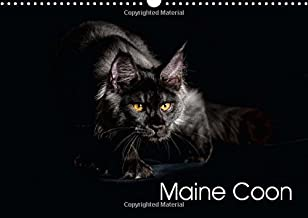 Maine Coon 2015: Gallery of Maine Coon Cats (Calvendo Animals)