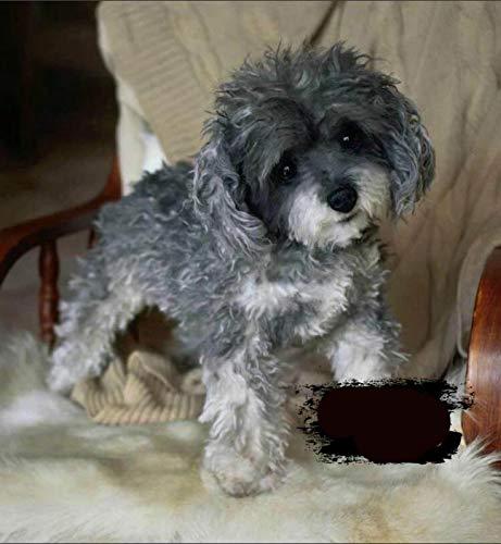AYily Simulation Pudel Hund, Mini Flopsies Cutie Yorkshire Terrier Hund, York Plüsch-Spielzeug, niedliche Hunde-Ornamente, für Kinder