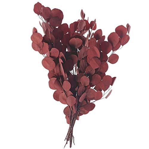 Hemoton Eukalyptus Getrocknete Zweige Trockenblumen Zweige Rot Dekozweige Blumenstrauß Natürliche Runde Blätter Hochzeit Zuhause Party Garten Weihnachten Festival Erntedankfest Dekoration