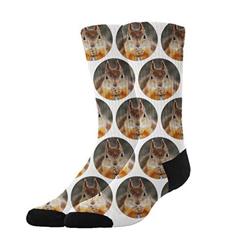 Jinkela Calcetines de Vestir Divertidos y Frescos, Calcetines de algodón con diseño de Ardilla para Hombre y Mujer.