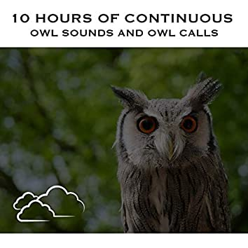 10 Hours of Continuous Owl Sounds and Owl Calls