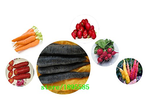 graines de carottes en vrac en pot graines de légumes Carottes 100% réel arc-en-graines de radis 100 particules / sac