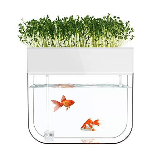 EUS Kit de Inicio de Acuario para acuarios de jardín de Agua acuática Cube para hogar/Escritorio/Bar/alféizar de Ventana/decoración de Restaurante