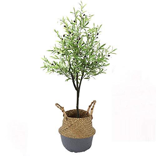 Yipianyun Palme Palmenbaum Königspalme,...