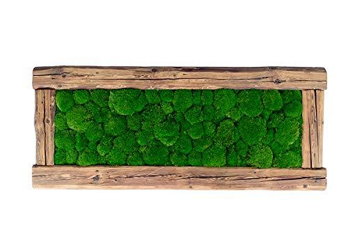 MoosSpirit Moosbild Moosbilder Wandbild mit Moos 100prozent Kugelmoos. Bilderrahmen aus originalem Altholz (136x56cm). Pflanzenbild Moosplate Wanddeko. Deko Geschenk.
