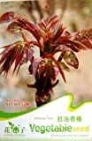 Each Pack 30+ Seeds Chinese Red Toon Seeds Toona sinensis(A.juss) Roem (1)