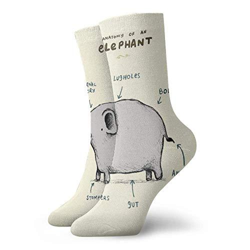 Anatomía de un elefante calcetines clásicos de confort atlético casual calcetines 30 cm/11.8 pulgadas para hombres y mujeres unisex