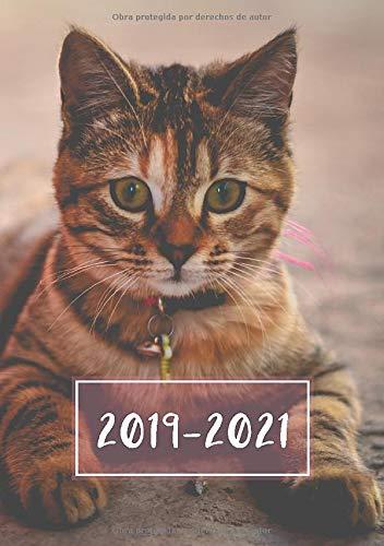 2019 - 2021: Comienza con semana 27 | Julio 2019 - Junio 2021 | Vista Semanal | 1 Semana en 1 Página | 24 Meses Calendario Planificador | A5 Planner | Gatito