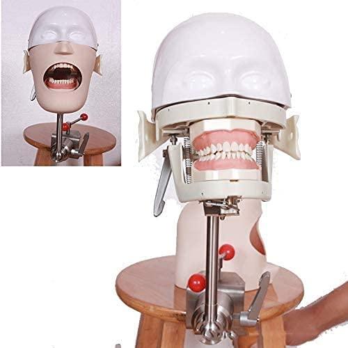 GHDE&MD De tamaño Natural Maniquí Fantasma Dental Simulador Dental de Cabeza con Entrenamiento de Modelo de Dientes Modelo de Equipo de formación en odontología