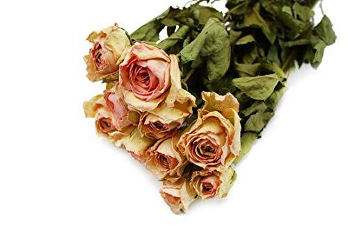 Dutch Masters in Dried Flowers Getrocknete Rosen/Trockenblumenstrauß Lila | 10 Natürliche Trockenrosen zweifarbig | Potpourri | Dekoblumen Strauß | 40 cm