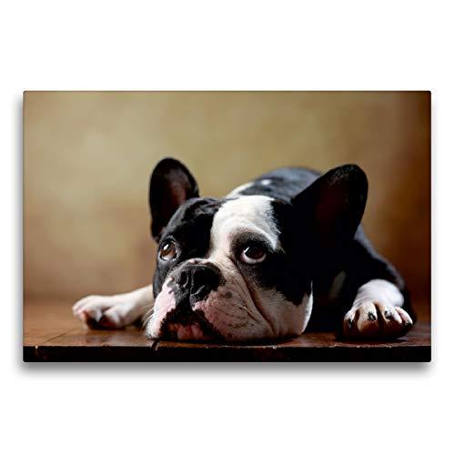 CALVENDO Premium Textil-Leinwand 75 x 50 cm Quer-Format Shahrukh - Französische Bulldogge, 2 Jahre, Leinwanddruck von Jana Behr