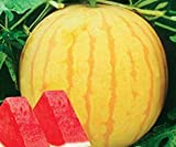 Seeds Fresh 'Huang Pi Qiu' Yellow Skin Red Seedless Watermelon Get 20PCS Seeds #GMS01YN