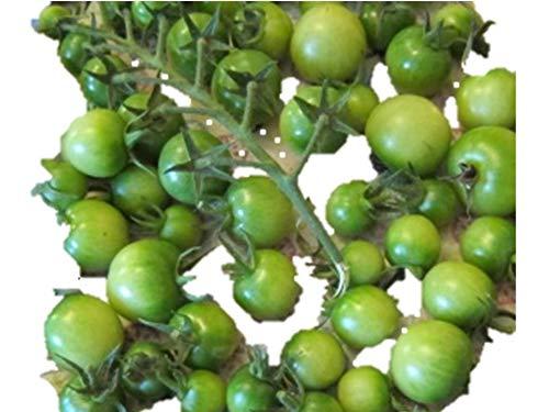 緑チェリー ミニトマト 種 18粒