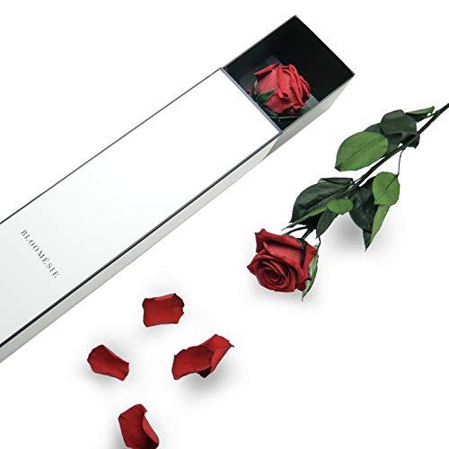 BLOOMÉSIE Duftende Langstiel Rose Rot, 1 Infinity Long Stem Rose, Ewige Rose mit Stiel Als Geschenk Für Frauen, Zimmer Deko Wohnzimmer Blumen, Haltbare Rose, Konservierte Rose mit Geschenk Box