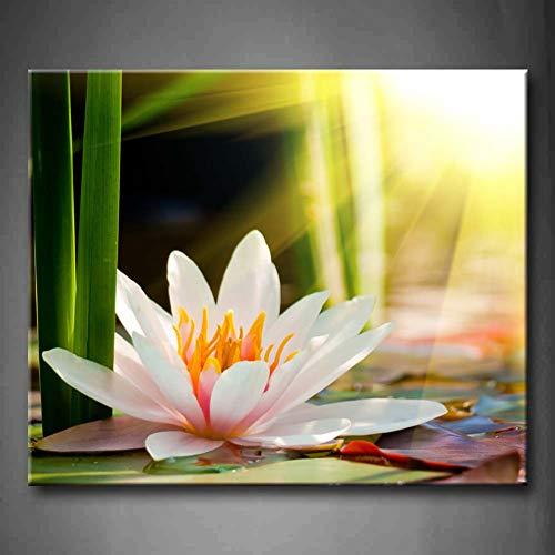 EBONP Leinwand Gemälde Leinwanddruck Kein Rahmen Wandkunst Bilder Seerose Sonnenschein Leinwanddruck Kunstwerk Blume Modernes Poster für Dekor-24x32inch