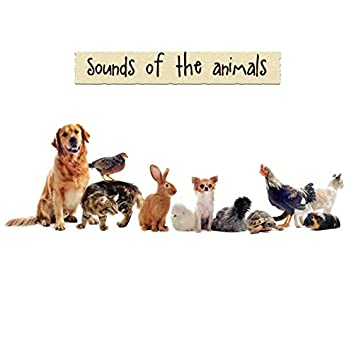 Sounds of the Animals