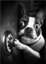 Dog Safe Cracker Funny Birthday Card