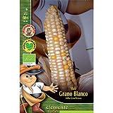Semillas ecológicas de Maiz Grano Blanco