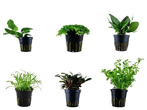 Tropica Vordergrund Set mit 6 Topf Pflanzen Aquariumpflanzenset Nr.19 Wasserpflanzen Aquarium Aquariumpflanzen