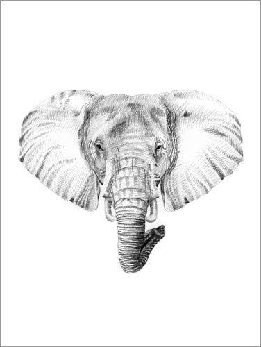 Poster 60 x 80 cm: Elefant Skizze von Editors Choice - hochwertiger Kunstdruck, neues Kunstposter