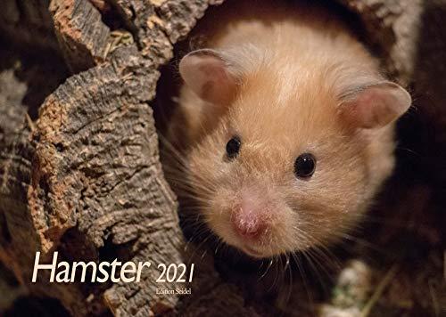 Edition Seidel Hamster Premium Kalender 2021 DIN A3 Wandkalender Tiere Haustiere