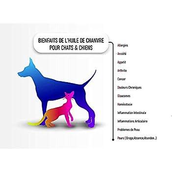 Huile chanvre bio chien et chat 5000 mg, 30 Ml aux Omega 3/6/9 pour animaux domestiques. Complément alimentaire Anti stress.Réduit l'anxiété, et améliore le sommeil. Pressée à froid
