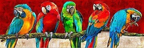 Rahmen-Kunst Keilrahmen-Bild - Michael Tarin: Parrot Art Red Leinwandbild Vögel Papageien bunt Kult aktuell Pop (50x150)