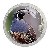 ネジ付きドレッサー引き出し用4個の白いキッチンキャビネットノブ丸い家の装飾-ヒップスターカリフォルニアウズラ鳥