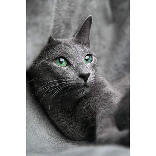 Lazodaer Kit de pintura de diamante redondo completo 5D, kit de pintura de diamantes de imitación con número de diamantes de imitación para adultos, bordado artes, artesanía, lindo gato, 30 x 39,9 cm