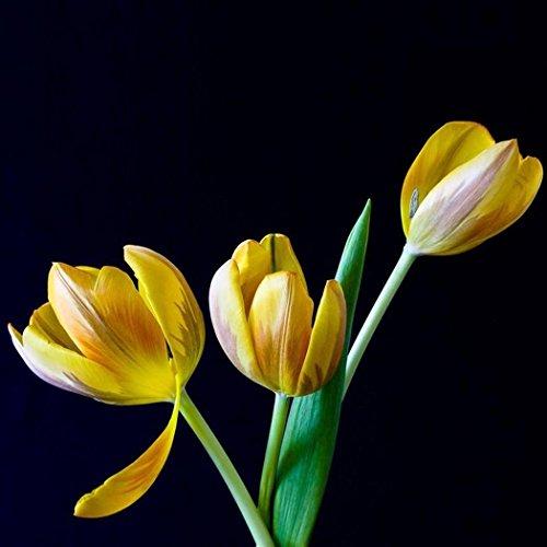 Toile Cirée Nappe tulipes Printemps Spring Jardin b5005-01 rectangulaire environ ovale
