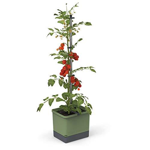 Tom Tomato - Tomatentopf - 4,5 L Wassertank Bewässerungssystem - Rankhilfe - Befestigungshaken - 20 L Erdvolumen - Kletterpflanzen - Pflanzkübel Pflanzgefäß Blumentopf Pflanzturm (Dunkelgrün)