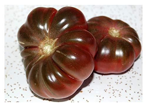 """Premier Seeds Direct ORG145 Tomaten """"Lila Calabash"""" organische Samen (Packung mit 50)"""
