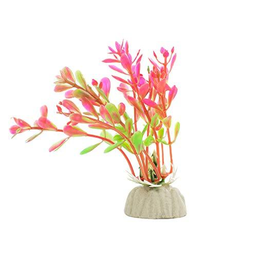 DIGIFLEX 10 x verschiedene Aquariumpflanzen Aquarien - 6