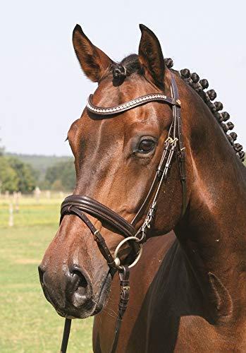 Hans Melzer Horse Equipment Trense Mechtersen, braun/messing, Warmblut