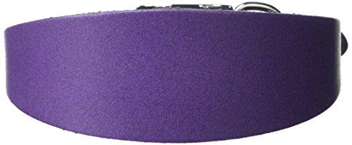 BBD Pet Products Italian G. Hound Collar, Talla única, 1/2 x 10 a 12 Pulgadas, Morado