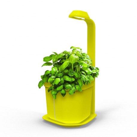 GENIE Kitchen Garden jaune -...