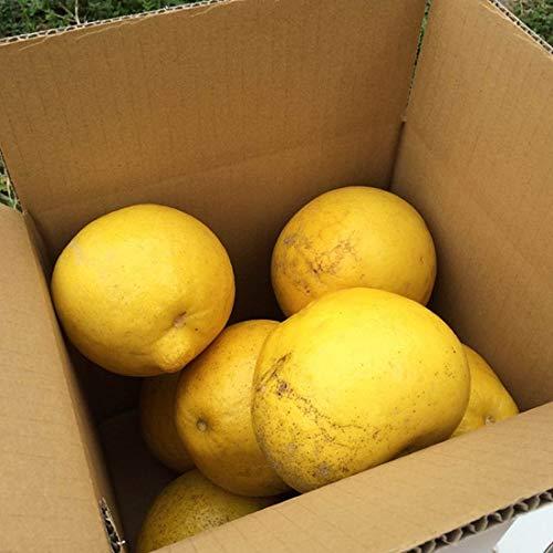 農薬をまいていない 土佐文旦 3kg×1箱 ひよこ皮むき器付 ご家庭用 青山農園 河内晩柑 ザボン 果汁多め 瑞々しい食感