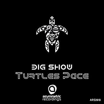 Turtle's Pace