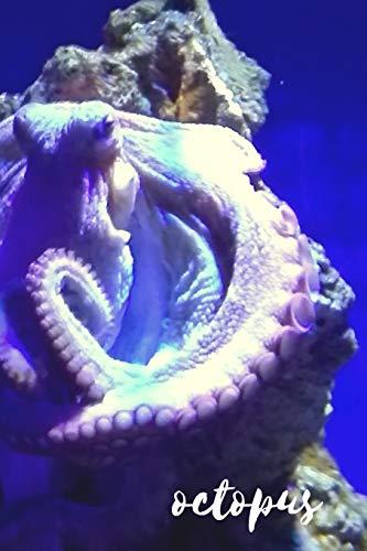 Octopus: Persona password notebook. Aquarium series