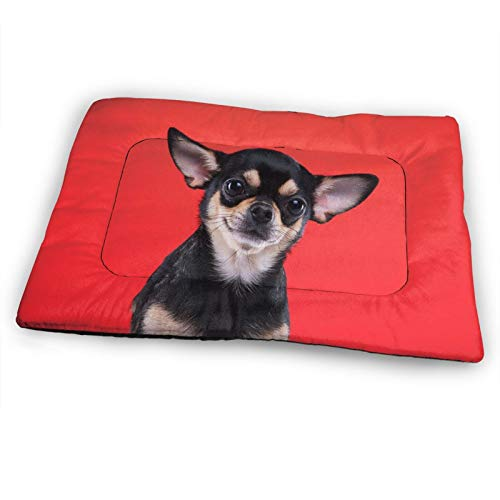 Xl Large Dog Bed Beautiful Chihuahua Dog Stylish Red Funny Animals Extra Large Dogs Crate Kennel Mat Pads Washable Durable Big Pet Sleeping Beds Mattress Comfy Soft Xxl Puppy Pad For Large Breed Dog C