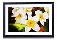 白いプルメリア -花 -#48523 - 絵画 装飾画 壁飾り アートパネル インテリアアート 木製の枠 壁ポスター モダン 現代壁の絵 額縁付きの完成品 横 40×60cm